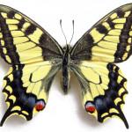 farfalla_FLORA ET LABORA